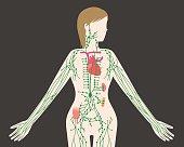 hernias inguinales en mujeres adultas